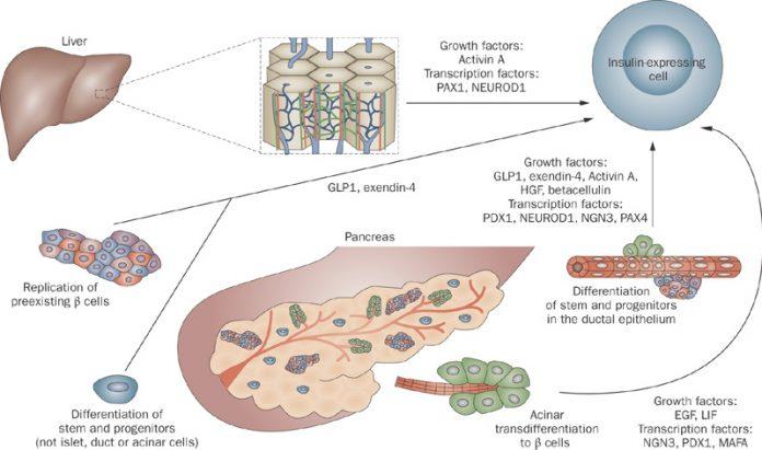 Danh mục chuỗi nhà thuốc GPP