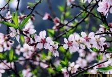 Dược điển Nhật 17